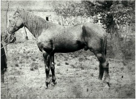 Конь, подаренный Юзам русским царем