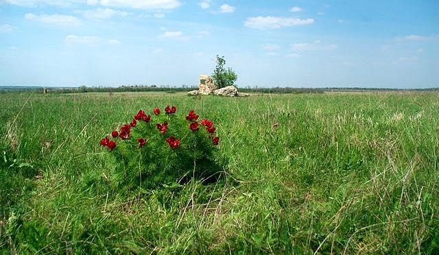 хомутовская степь