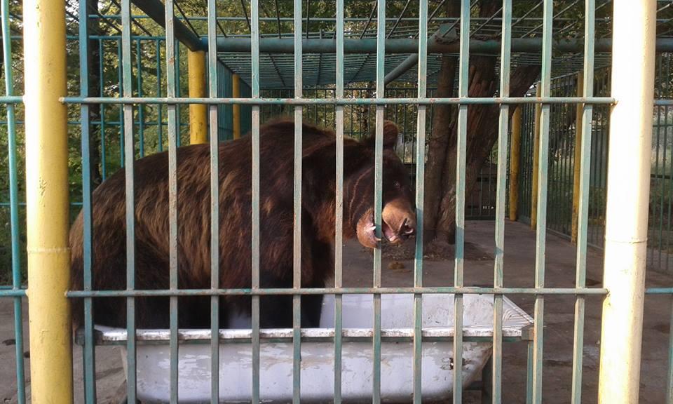 медведь Ясиноватая