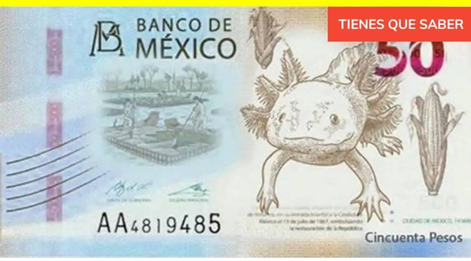 Аксолотль и амбистома на деньгах в Мексике