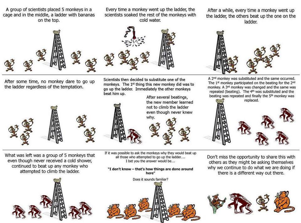 пять обезьян вода лестница банан