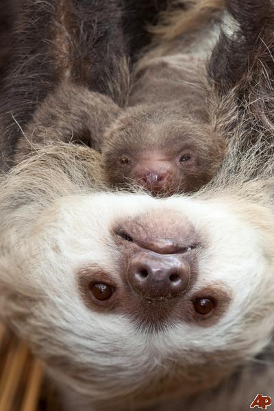 Ленивцы зависли