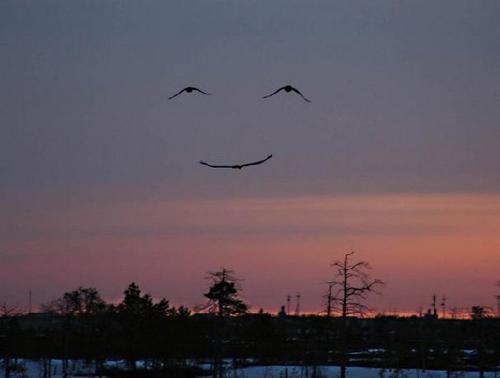 Фотографу улыбнулась удача