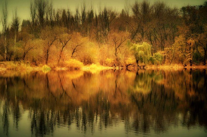 Путиловская роща зимой. Фото Евгении Карпачевой.