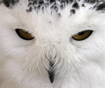 Глаза зимы