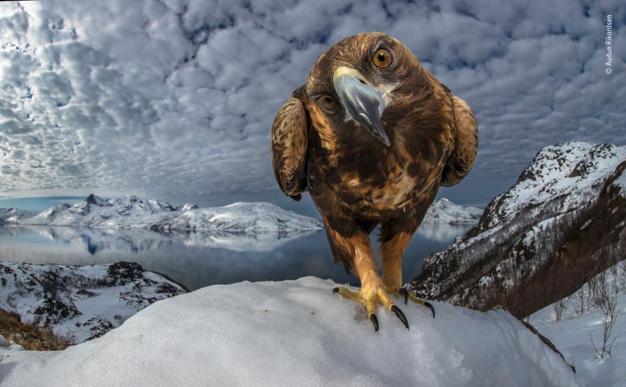 Лучшие фото природы любознательный орел
