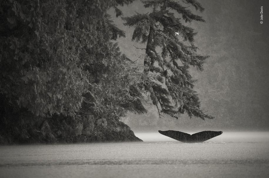 Лучшие фото природы горбатый кит