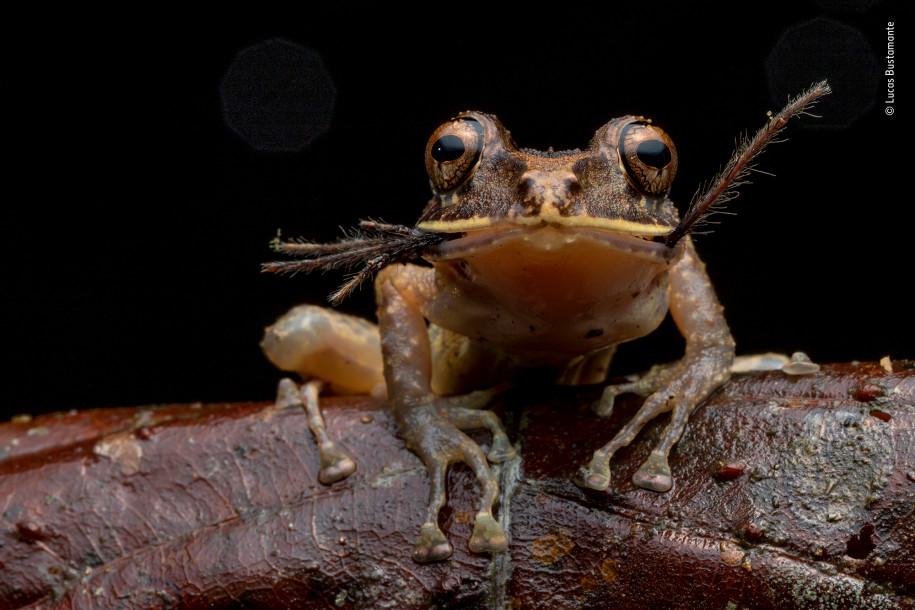 Лучшие фото природы лягушка закусывает пауком