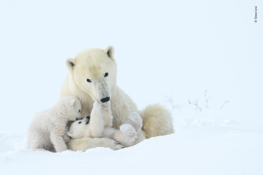 Лучшие фото природы белые медведи